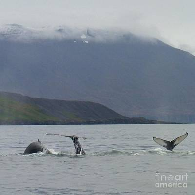 Photograph - Three Whales Fluking by Barbie Corbett-Newmin