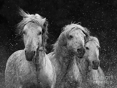 Southern France Photograph - Three White Horses Splash by Carol Walker
