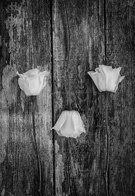 Photograph - Three White Roses by Kim Hojnacki