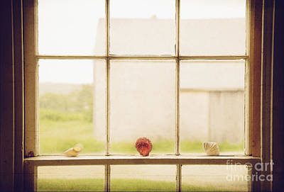 Art Print featuring the photograph Three Window Shells by Craig J Satterlee