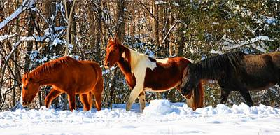 Photograph - Three Winter Horses by Kathryn Meyer