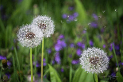 Photograph - Three Wishes by Karen Casey-Smith