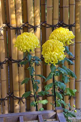 Three Yellow Blooms Art Print by Richard Baker