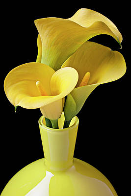 Three Yellow Calla Lilies Art Print by Garry Gay