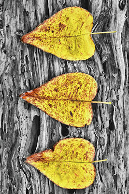 Photograph - Three Yellow Leaves by Mihaela Pater