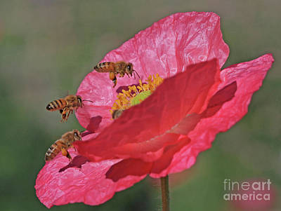 Poppy Wall Art - Photograph - Threes A Crowd by Gary Wing