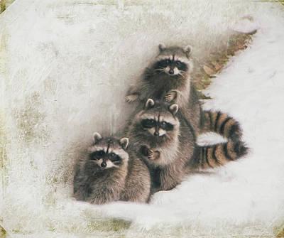 Photograph - Three Amigos by Marilyn Wilson