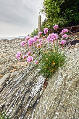 Photograph - Thrift At Penarrow Point by Terri Waters