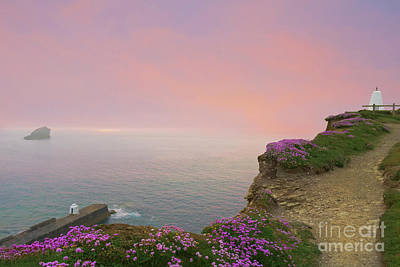Photograph - Thrift Flowers Portreath Cornwall by Terri Waters