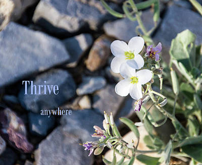 Photograph - Thrive Anywhere by Nadine Berg