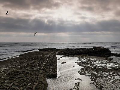 Photograph - Throne Of Seagulls by Edgar Laureano