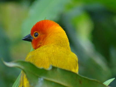 Exploramum Photograph - Through A Child's Eyes - Close Up Yellow And Orange Bird 2 by Exploramum Exploramum