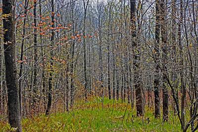 Through A Forest Wilderness Art Print