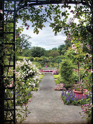 Photograph - Through A Rose Pergola by Jessica Jenney