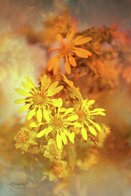Photograph - Through Smoked Glass by Theresa Campbell