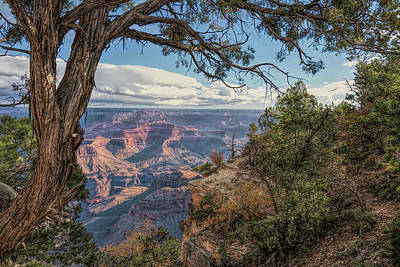 Photograph - Through The Branches by John M Bailey