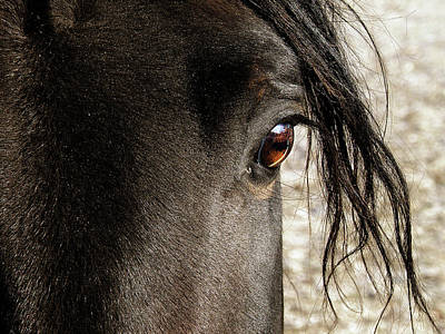 Photograph - Through The Eye Of A Stallion by Scott Hovind