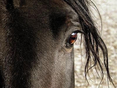 Hovind Photograph - Through The Eye Of A Stallion by Scott Hovind