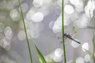 Photograph - Through The Eyes Of A Dragonfly by Penny Meyers