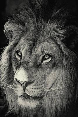 Photograph - Through The Eyes Of A King  by Saija Lehtonen