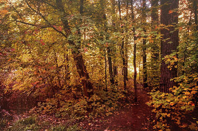 Photograph - Through The Fall Forest  by Saija Lehtonen