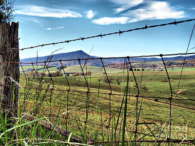 Through The Fence Art Print by Kathy Jennings