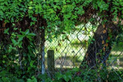 Grow Digital Art - Through The Fence by Terry Davis