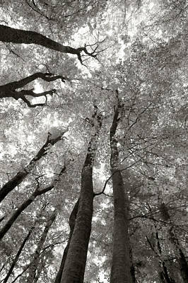Through The Forest 2 Art Print by Marjan Jankovic