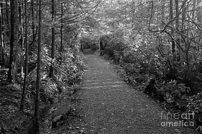 Photograph - Through The Forest Canopy Black And White by Adam Jewell