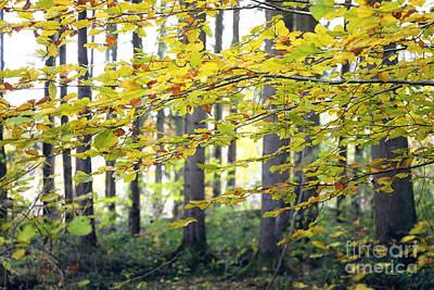 Photograph - Through The Forest by Jutta Maria Pusl