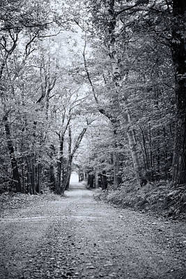 Photograph - Through The Forest by Sue OConnor