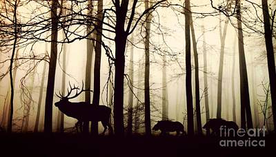 Boar Photograph - Through The Forest by Thomas Jones