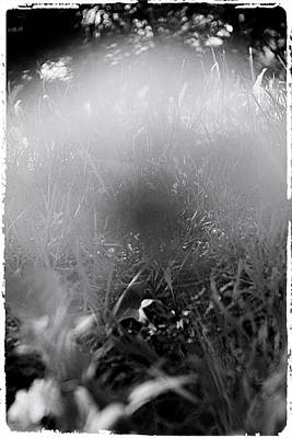 Photograph - Through The Ghost by Mario MJ Perron