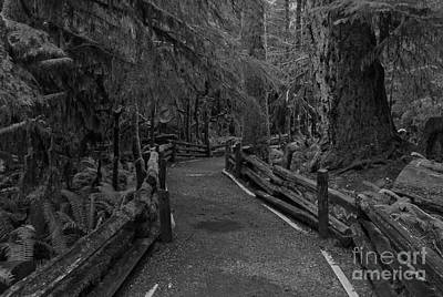 Photograph - Through The Giants - Black And White by Adam Jewell