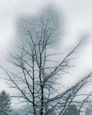 Photograph - Snow by Thomas Hall