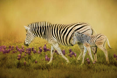 Photograph - Through The Meadow Zebra Art by Jai Johnson