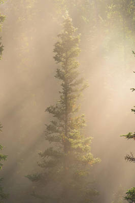 Through The Mist Art Print by Dustin  LeFevre
