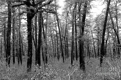 Pine Barrens Photograph - Through The Pinelands by John Rizzuto