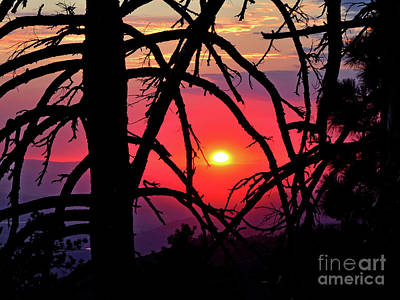 Photograph - Through The Pines by Third Eye Perspectives Photographic Fine Art