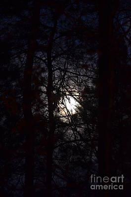 Photograph - Through The Pines by Maria Urso