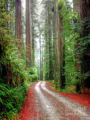 Through The Redwood Forest Art Print by Juli Scalzi