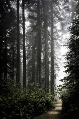 Photograph - Through The Redwoods by Eduard Moldoveanu