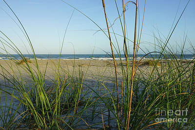 Photograph - Through The Sea Grass by Jennifer White