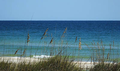 Photograph - Through The Sea Oats At St. George's Island by Judy Wanamaker