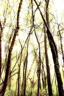 Through The Trees Art Print by Humboldt Street