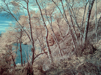 Photograph - Through The Trees In Infrared by Greg Nyquist
