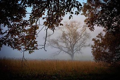 Through The Trees In The Mist Print by Rick Berk