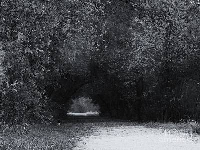 Photograph - Through The Trees by J L Zarek