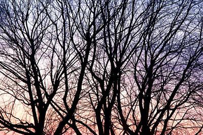 Through The Trees Art Print by Martin Rochefort