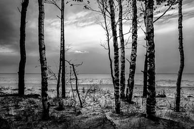 Photograph - Through The Trees by Michael Damiani